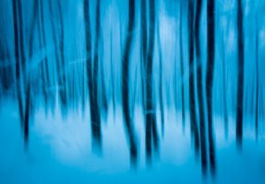"""Twilight Trees in Winter"" - Karen Desjardin - Valkarie Gallery"